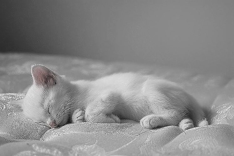 Не спать стих про кота