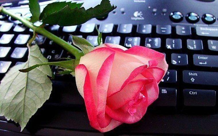 Цветок другу