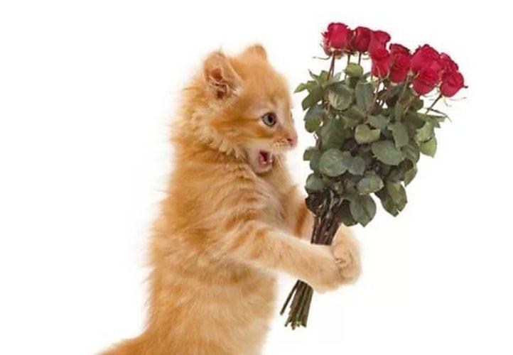 Кошка с цветами открытка с днем рождения 99