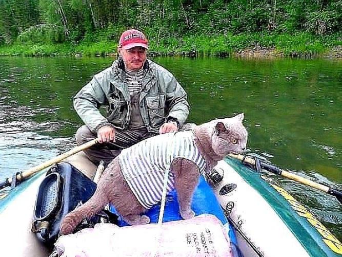 котик идет на рыбалку