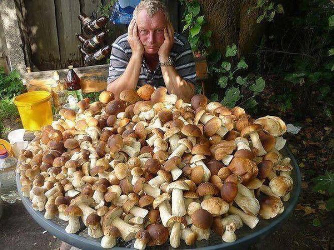 Лесные грибы в домашних условиях 205