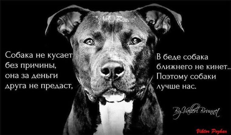 сильная любовь к собакам почему всё запросу