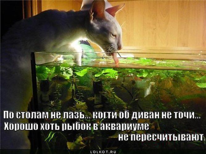 Приколы про аквариум картинки