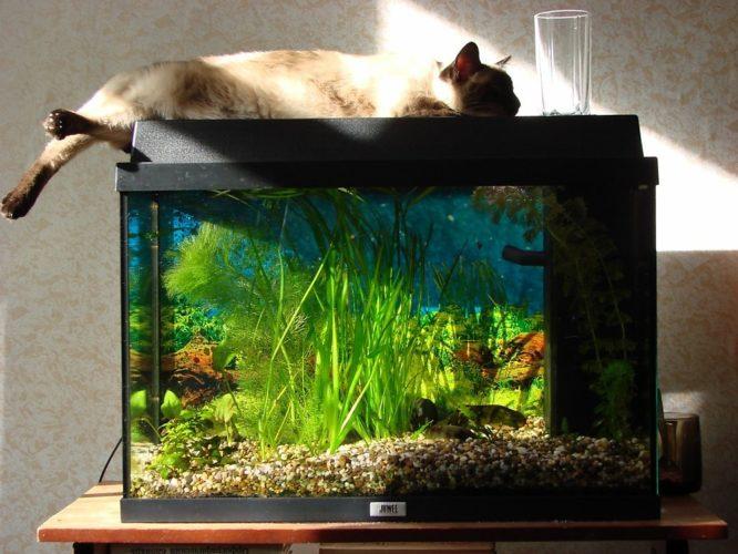 смешные картинки про аквариумы фото готовая
