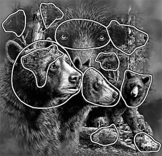 Смотреть картинки про животных енот быть точнее