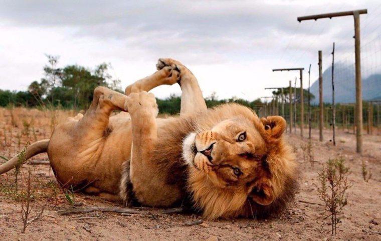 определенной температуре отзывы о позе льва этой статье