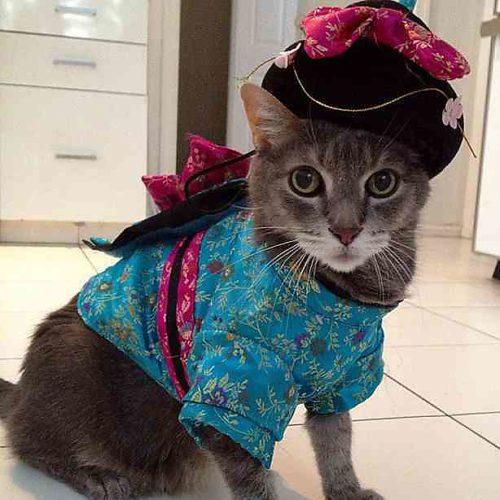 Для, прикольные картинки с кошками в одежде