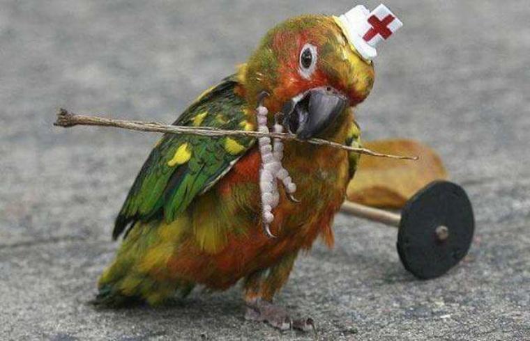 Поздравление марине, смешная картинка с попугаем